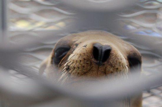 sea lion pup jg 04