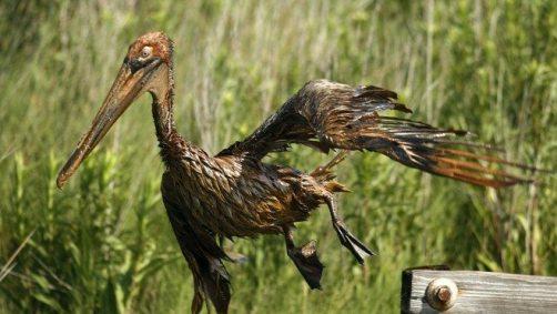 oil spill peligan