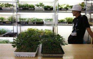marijuana oakland farm
