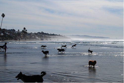 dogs-running-beach
