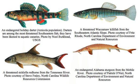 fish-endangered