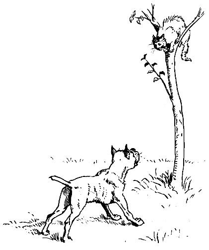 dog chasing cat up tree