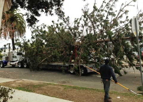 OB xmas tree 2013 04