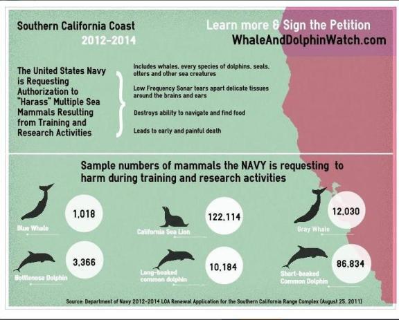 sonar harm whales
