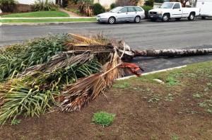 OB storm feb-mar 14 mw tree
