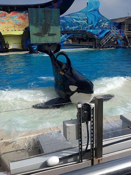 Orca Ulises No3