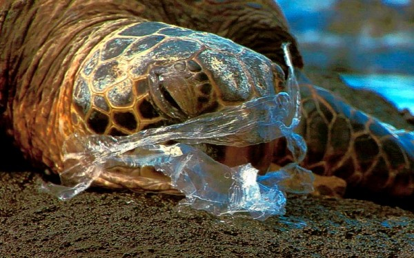 plastic bag turtle
