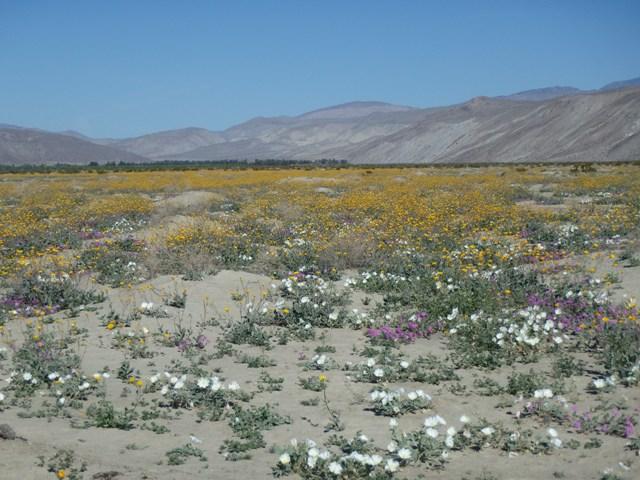 Ob time in borrego springs desert flowers hawks caterpillars and ob time in borrego springs desert flowers hawks caterpillars and sky art mightylinksfo