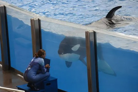 Orca SeaWorld OrcaResearchTrust