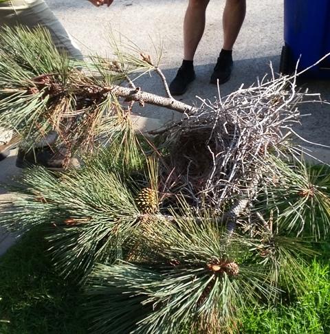 OB Torrey Cut nest ed