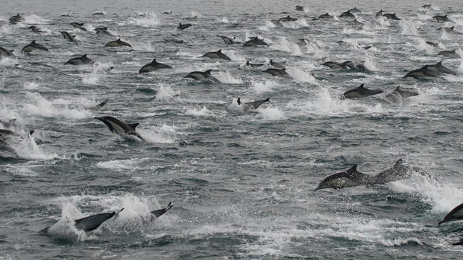 dolphins-1000s-2-14-13-insd
