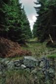 Jizerské hory - cesta na Smrk z Tišiny