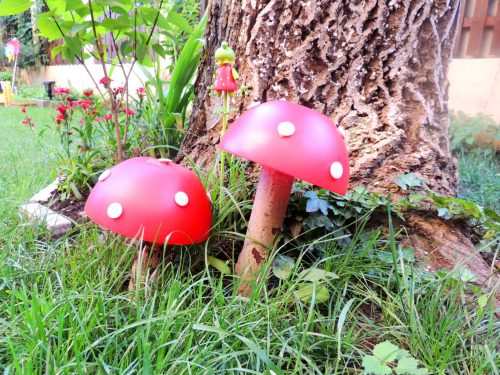 Obraznicaturi - Ciuperci de gradina