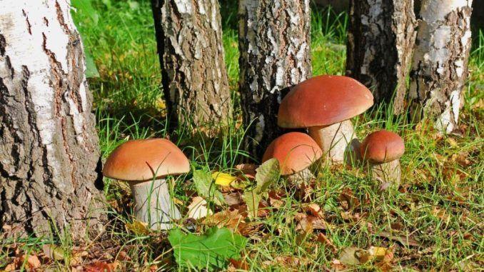 Значение грибов в природе и жизни человека