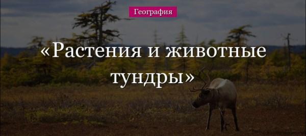 Тундра – растения и животные климатической зоны России для ...