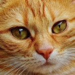 cat-1334970_640 by Alexas_Fotos - pixabay.com