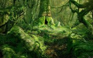 hipotesis26-bosque1