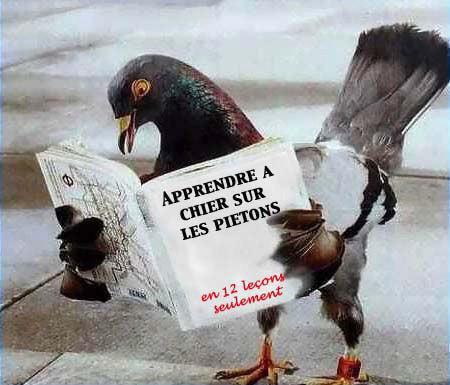 pigeon lecteur