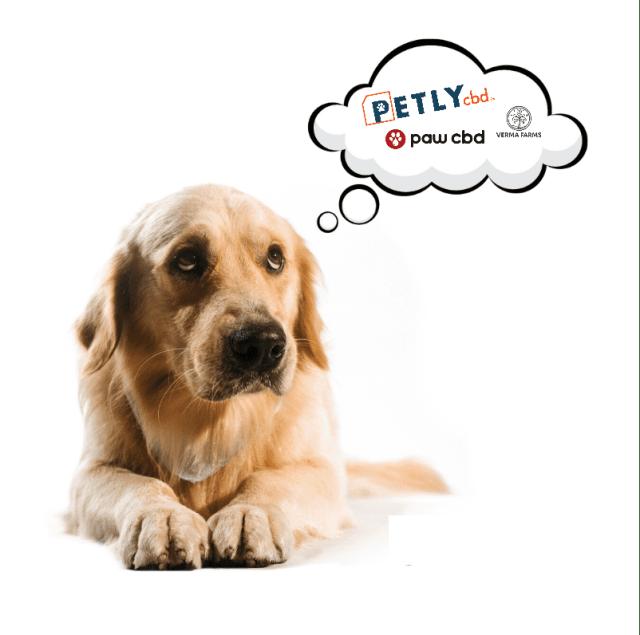 Best CBD Oil for Pets - Pet CBD Brands for 2022
