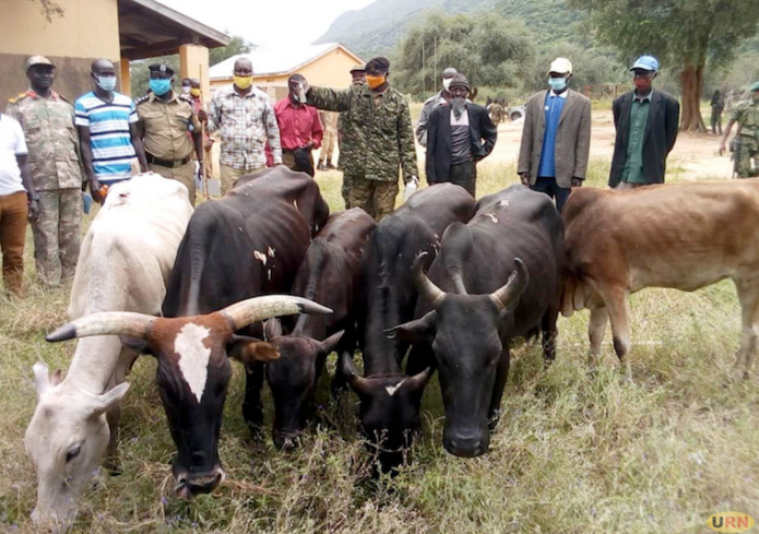 Some of the animals recovered and returned by South Sudanese authorities