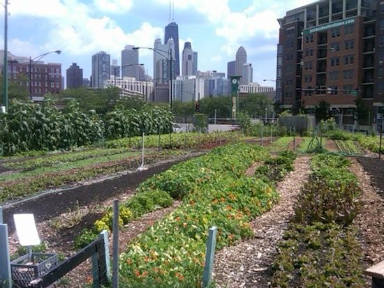 Urban-Farm
