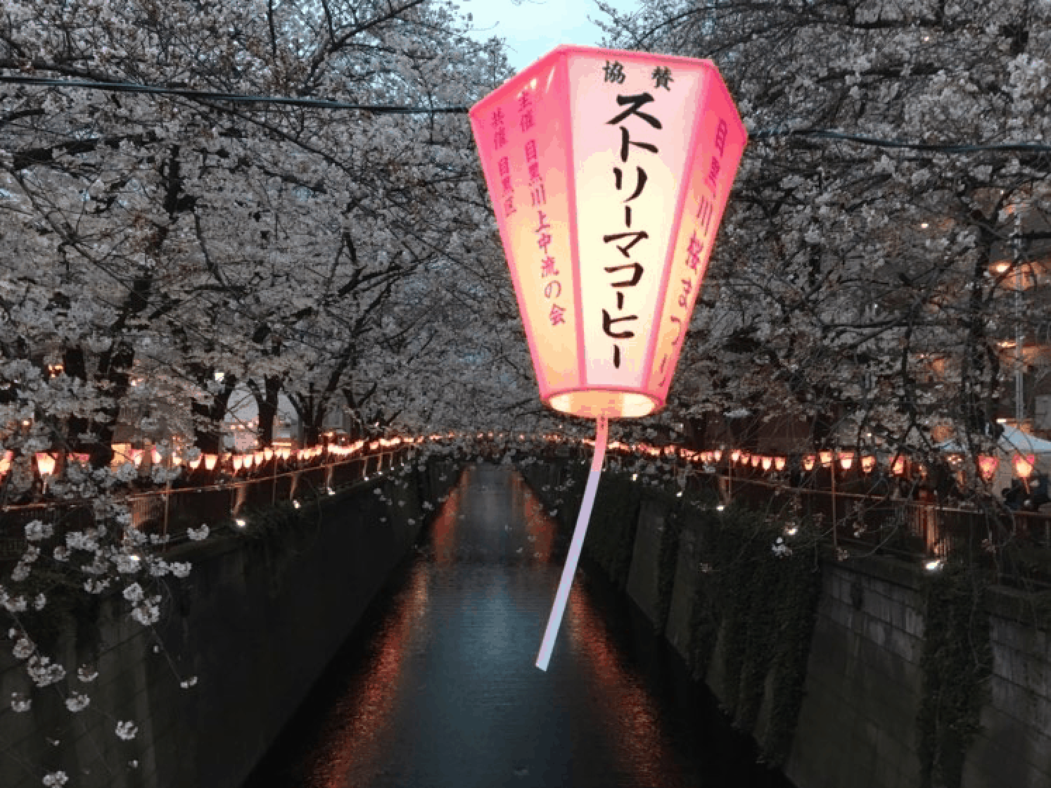 Major Cherry Blossom Festivals Are Canceled In Tokyo Due To Coronavirus Obsessed With Japan