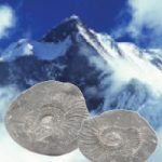 Ocean fossils found among the worlds highest mountains