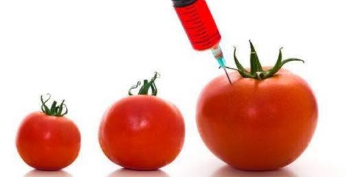 Ghana ready to introduce GMOs —Biosafety Authority