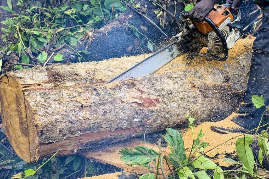 Shoot-to-kill not an option in addressing illegal chainsaw menace [Article]
