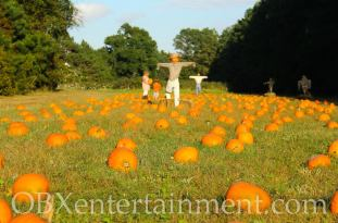 Grandy Greenhouse Pumpkin Patch (photo: OBXentertainment.com)