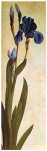 iris-troiana.jpg!Blog