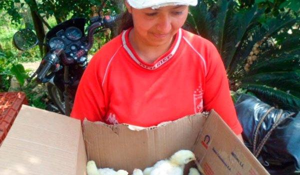apoyo-a-campesinos-de-jamundi-pollos-ene-21