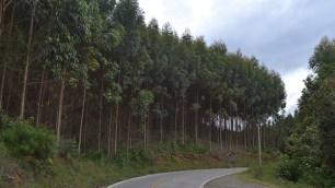 Corredor turístico hacia Dapa