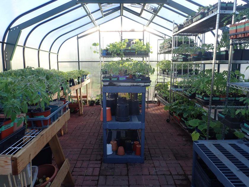 plant sale 2020