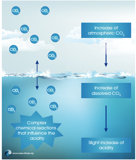 Simplified mechanism of ocean acidification