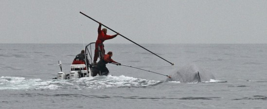 Whale Tagging