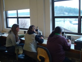 Students at the microscopes analyzing samples