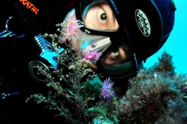 Diver at the marina reserve Llevante de Mallorca