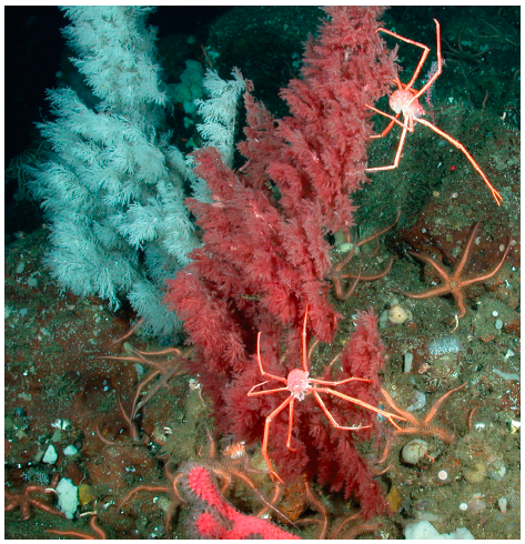 A Unique Underwater Niche For Christmas Trees Oceanbites
