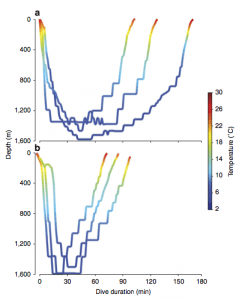 From Thorrold et al., 2014. Dive profiles of M. tarapacana at 75 s intervals. (a) Depth and temperature profiles at from three day dives (6:00-18:00). (b) Depth and temperature profiles from three night dives (18:00–6:00).