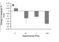 Fig 5: This plot show the percent cover of seagrass by treatment. C = control, N = nutrient addition, J = jellyfish addition, J+N = jellyfish and nutrient addition.