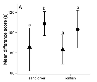 Fig. 2 Not naïve! Male damselfish spend more time hiding in the presence of a large predator than of a small one. They do not behave differently toward native sand divers than they do toward invasive lionfish. Sand divers are shown on the left and lionfish on the right. Triangles indicate small predators and squares represent large ones. Male damselfish treat sand divers and lionfish as equivalent threats, and are thereby not naïve prey for lionfish.