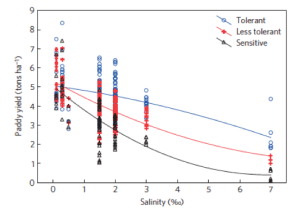 Figure 1: It is clear that saltier soil means fewer rice crops, especially the rice most sensitive to salinity. This shows the relationship between soil salinity and yields of rice varieties with variable salinity tolerances from 2005-2010. (Smajgl 2015)