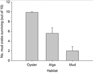 Fig 1. Mean (+ SE) number (out of ten) of Panopeus herbstii mud crabs surviving across 10 replicates in each of three habitats (oyster = Crassostrea virginica, alga = Gracilaria vermiculophylla, mud = bare) over 12 h of deployment with a blue crab.