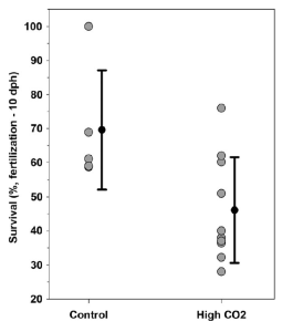 Figure 2: Survival of Menidia menidia offspring exposed to control (ambient – 460 μatm) levels of CO2 and high levels of CO2 (2300 μatm).