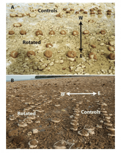 Fig 3. This photo shows how researchers manipulated the coral colonies.