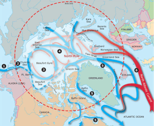Figure 1: Water currents of the Arctic Ocean. Warm salty water enters from the North Atlantic Ocean, where it sinks beneath the cooler currents of the Arctic Ocean, and moves around the Arctic Basin.  (WHOI, Dive and Discover)
