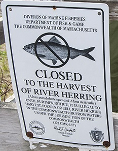 Figure 3 - Signs alerting citizens about the moratorium on river herring harvest in MA.