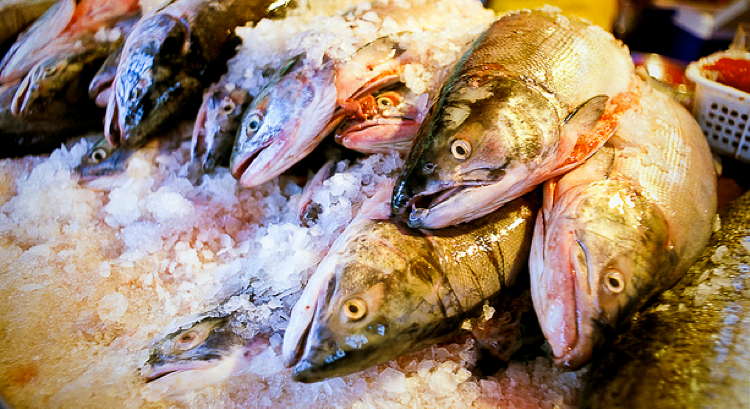 Salmon on ice.  (Image credit: annon, flickr Creative Commons)