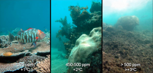 Fig. 1: This figure depicts what reefs will look like when waters warm and become more acidic. Corals become covered in dense mats of algae and the ecosystem is changed.